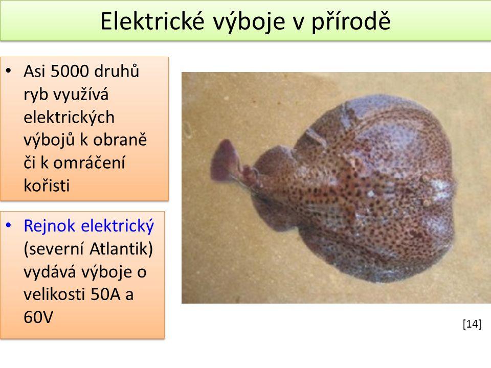 Elektrické výboje v přírodě Elektrické výboje v přírodě Rejnok elektrický (severní Atlantik) vydává výboje o velikosti 50A a 60V Asi 5000 druhů ryb využívá elektrických výbojů k obraně či k omráčení kořisti [14]