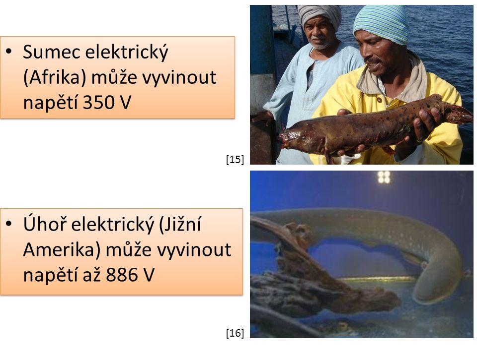 Úhoř elektrický (Jižní Amerika) může vyvinout napětí až 886 V Sumec elektrický (Afrika) může vyvinout napětí 350 V [15] [16]