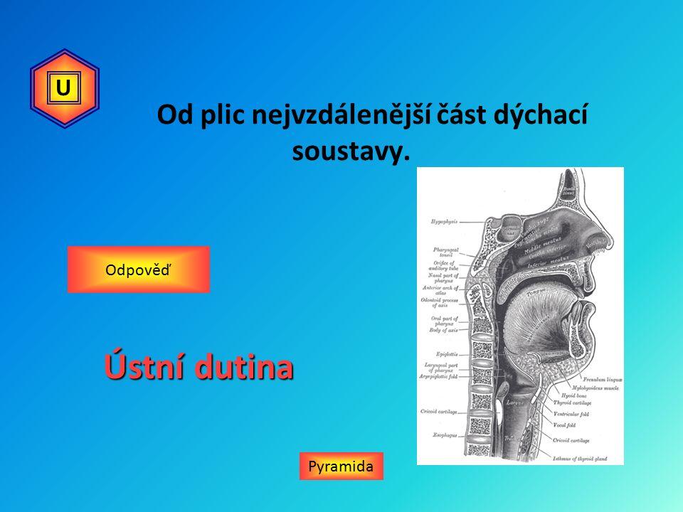Od plic nejvzdálenější část dýchací soustavy. Pyramida Odpověď Ústní dutina U