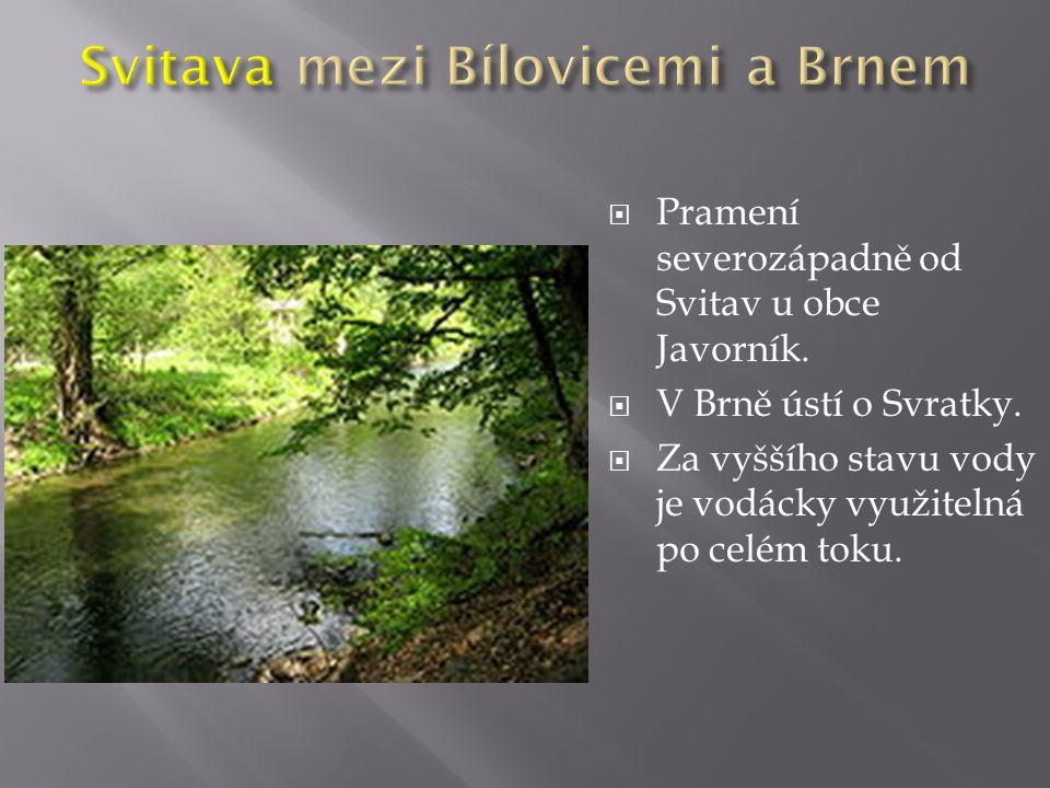  Pramení severozápadně od Svitav u obce Javorník.