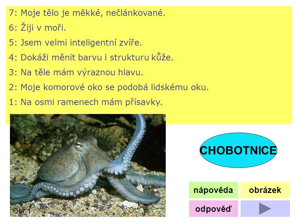 7: Moje tělo je měkké, nečlánkované. 6: Žiji v moři. 5: Jsem velmi inteligentní zvíře. 4: Dokáži měnit barvu i strukturu kůže. 3: Na těle mám výraznou
