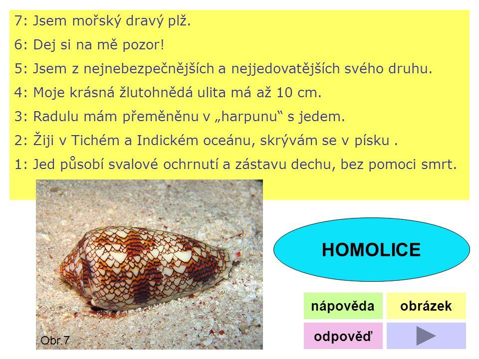 7: Jsem mořský dravý plž. 6: Dej si na mě pozor! 5: Jsem z nejnebezpečnějších a nejjedovatějších svého druhu. 4: Moje krásná žlutohnědá ulita má až 10