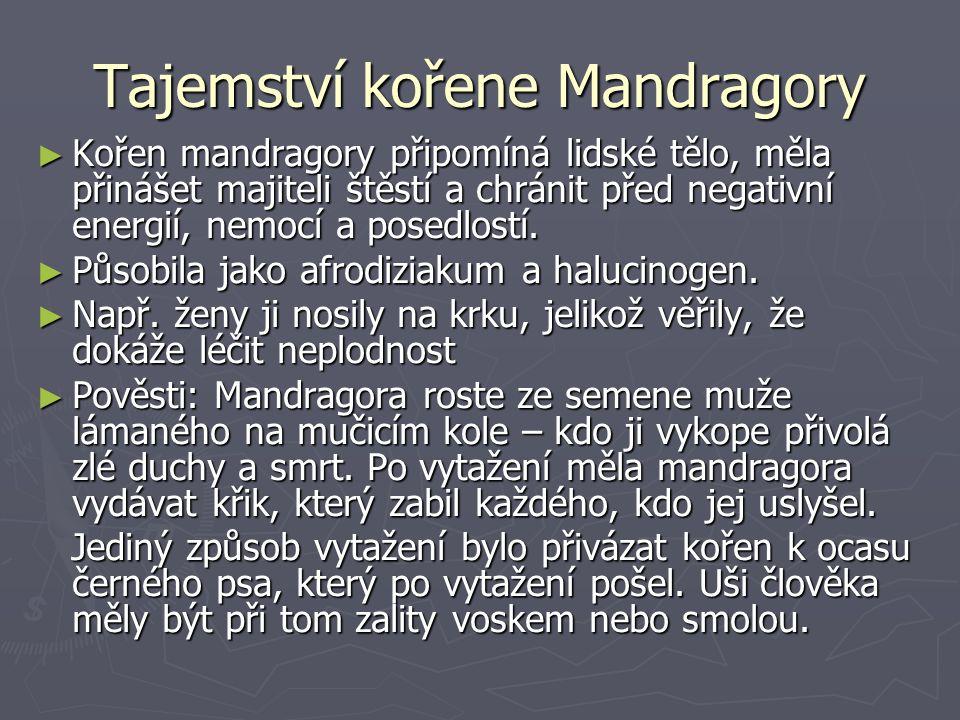 Tajemství kořene Mandragory ► Kořen mandragory připomíná lidské tělo, měla přinášet majiteli štěstí a chránit před negativní energií, nemocí a posedlostí.