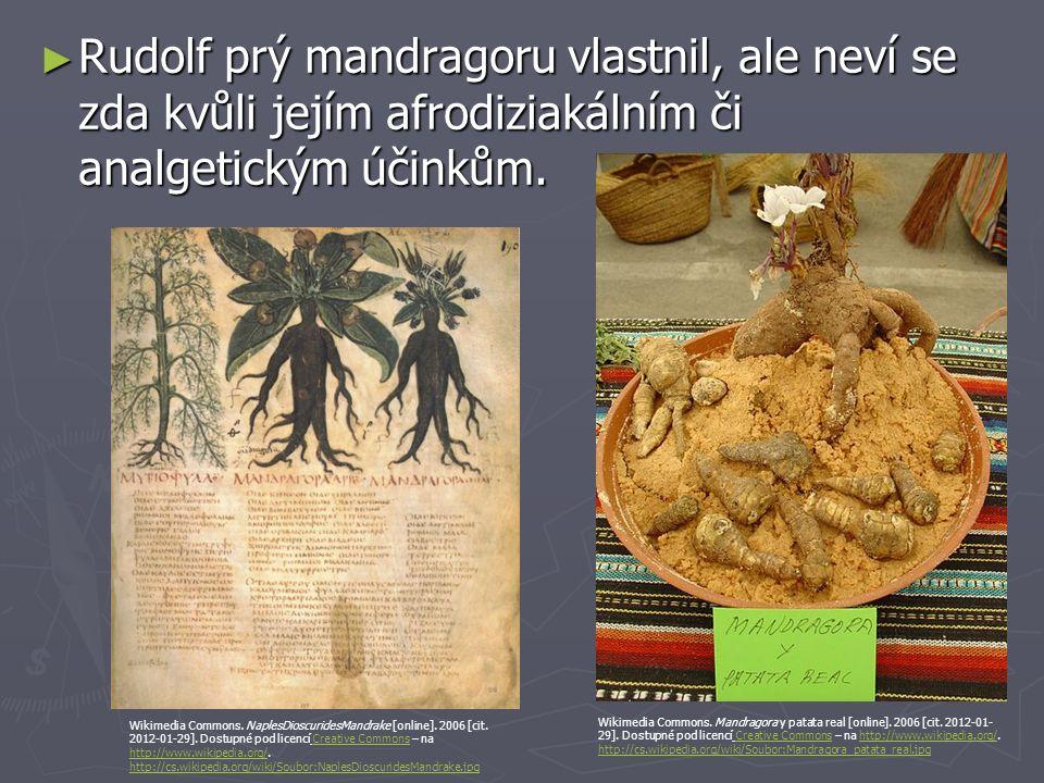 ► Rudolf prý mandragoru vlastnil, ale neví se zda kvůli jejím afrodiziakálním či analgetickým účinkům. Wikimedia Commons. Mandragora y patata real [on