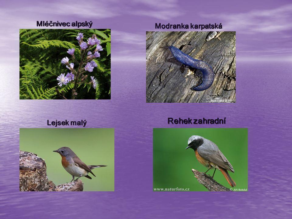 Čertoryje nejrozsáhlejší komplex květnatých bělokarpatských luk nejrozsáhlejší komplex květnatých bělokarpatských luk vyskytuje se zde velký počet vzácných rostlin a živočichů, např.