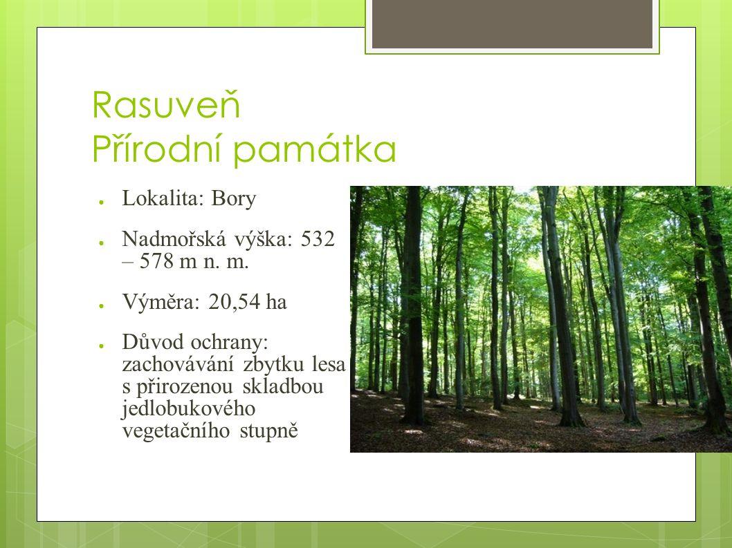 Rasuveň Přírodní památka ● Lokalita: Bory ● Nadmořská výška: 532 – 578 m n.