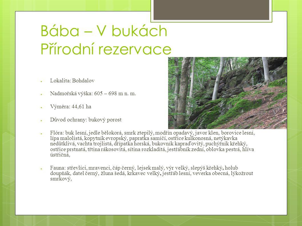 Bába – V bukách Přírodní rezervace ● Lokalita: Bohdalov ● Nadmořská výška: 605 – 698 m n.