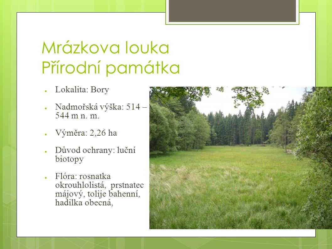 Mrázkova louka Přírodní památka ● Lokalita: Bory ● Nadmořská výška: 514 – 544 m n.