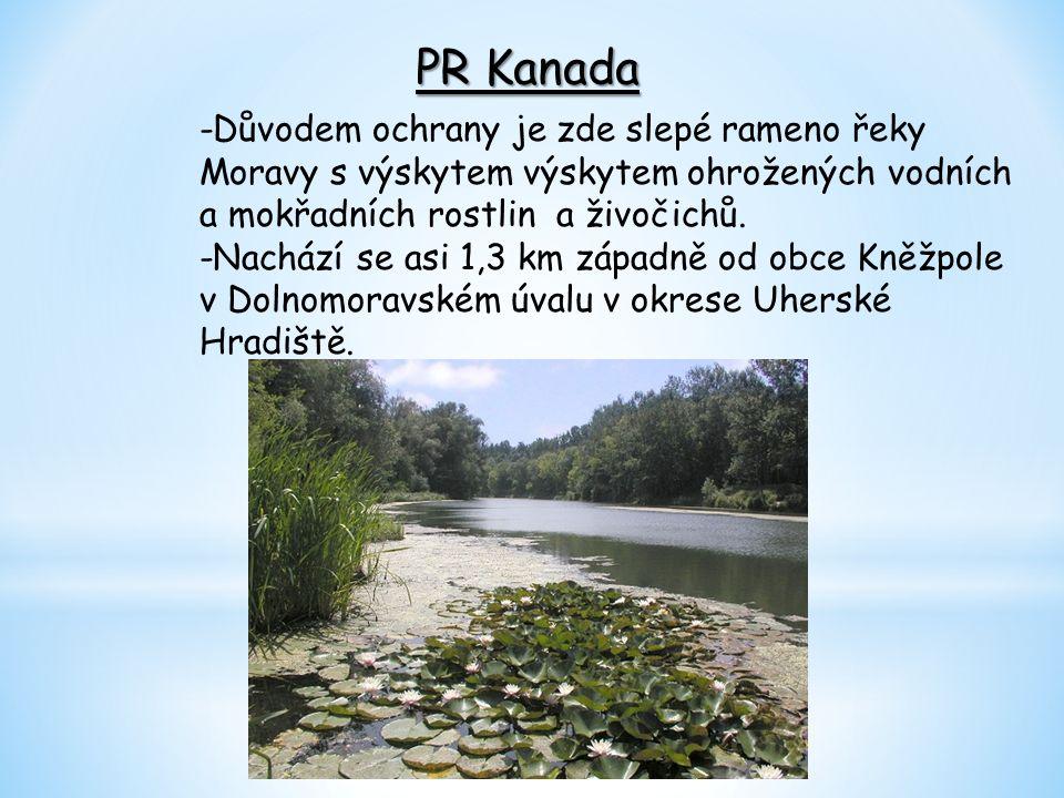 PR Javořina -je zároveň také NPR(Národní přírodní rezervace) -tvoří ji lesní porost pralesovitého charakteru v hřebenové části Bílých Karpat – na severních svazích vrchu Velká Javořina.