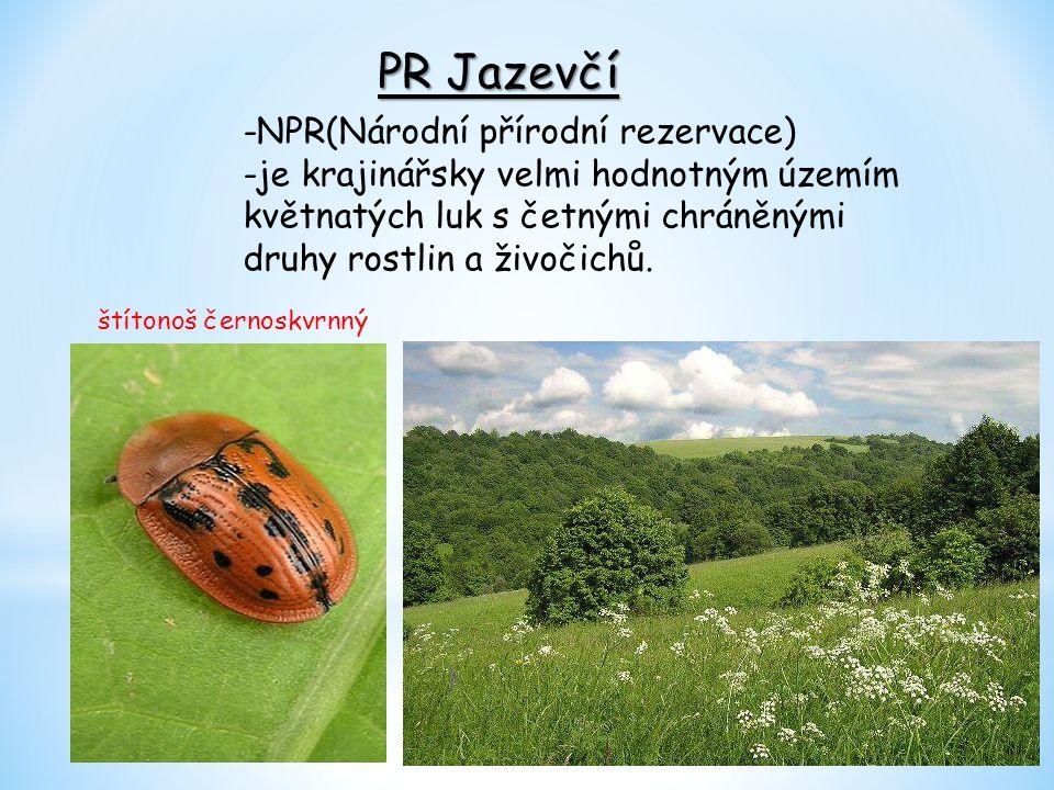 PR Jazevčí -NPR(Národní přírodní rezervace) -je krajinářsky velmi hodnotným územím květnatých luk s četnými chráněnými druhy rostlin a živočichů.