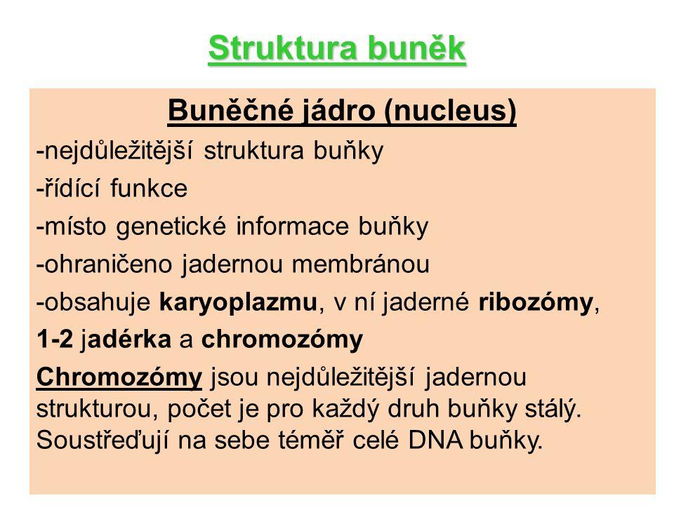Struktura buněk Buněčné jádro (nucleus) -nejdůležitější struktura buňky -řídící funkce -místo genetické informace buňky -ohraničeno jadernou membránou -obsahuje karyoplazmu, v ní jaderné ribozómy, 1-2 jadérka a chromozómy Chromozómy jsou nejdůležitější jadernou strukturou, počet je pro každý druh buňky stálý.