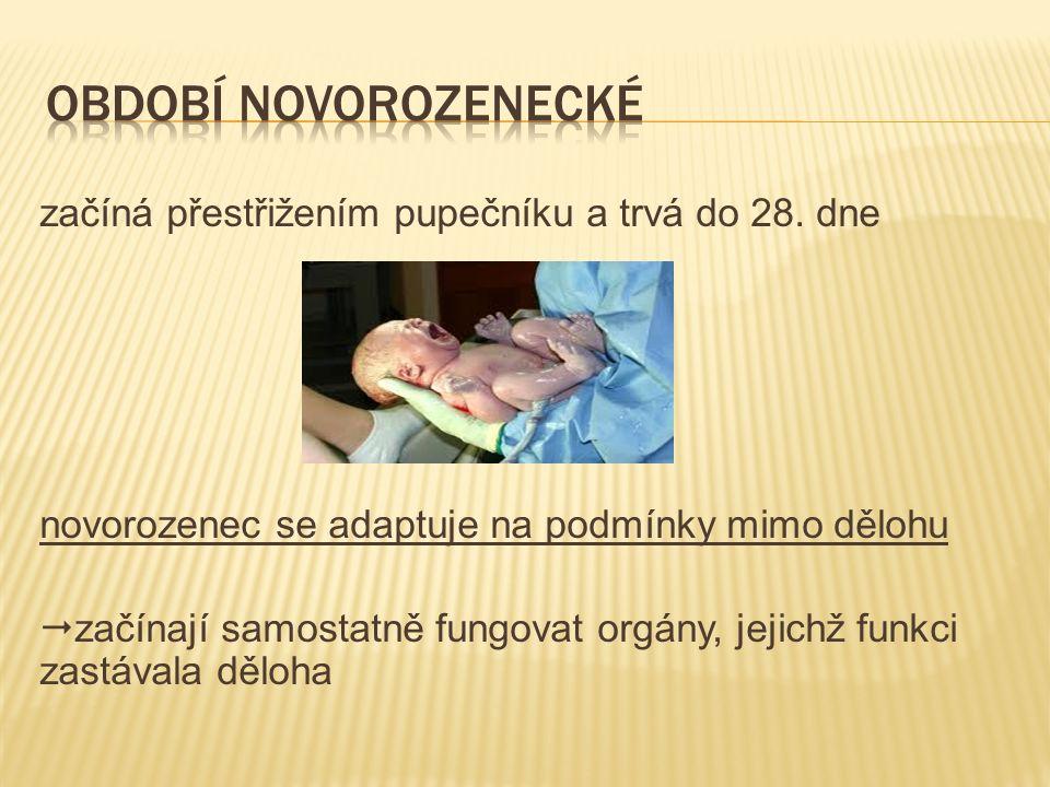  dýchací soustava novorozenec spontánně dýchá několik sekund po narození po prvním vdechu nastává výdech doprovázený křikem rozvinutí plic ( surfaktant ) podráždění dýchacího centra   parciálního tlaku kyslíku   parciálního tlaku oxidu uhličitého