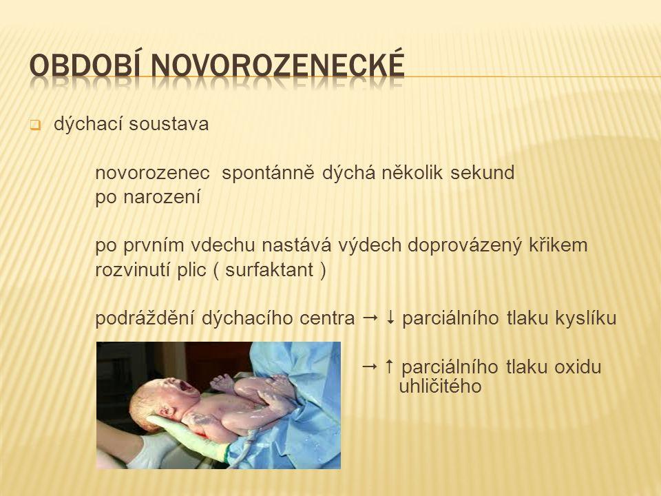  dýchací soustava novorozenec spontánně dýchá několik sekund po narození po prvním vdechu nastává výdech doprovázený křikem rozvinutí plic ( surfakta