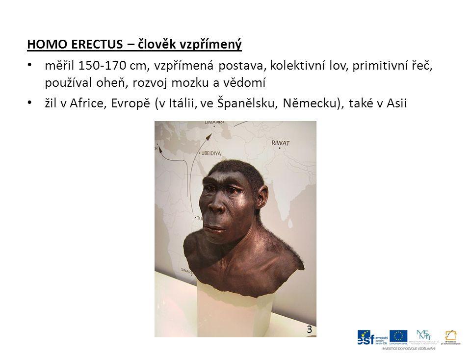 NEANDERTÁLEC měřil 155-165 cm, téměř vzpřímený, robustní typ, masivní lebka, široký plochý nos, chyběl bradový výběžek znal oheň, byl lovcem, sběračem ovoce, žil v tlupách, složitá kultura obýval jeskyně a skalní převisy žil v Africe, Asii a v Evropě jedná se o slepou větev – vymřel před 40-25 tisíci lety 4