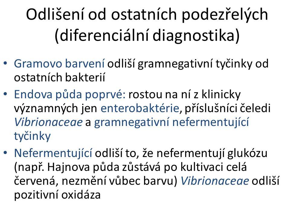 Odlišení od ostatních podezřelých (diferenciální diagnostika) Gramovo barvení odliší gramnegativní tyčinky od ostatních bakterií Endova půda poprvé: rostou na ní z klinicky významných jen enterobaktérie, příslušníci čeledi Vibrionaceae a gramnegativní nefermentující tyčinky Nefermentující odliší to, že nefermentují glukózu (např.