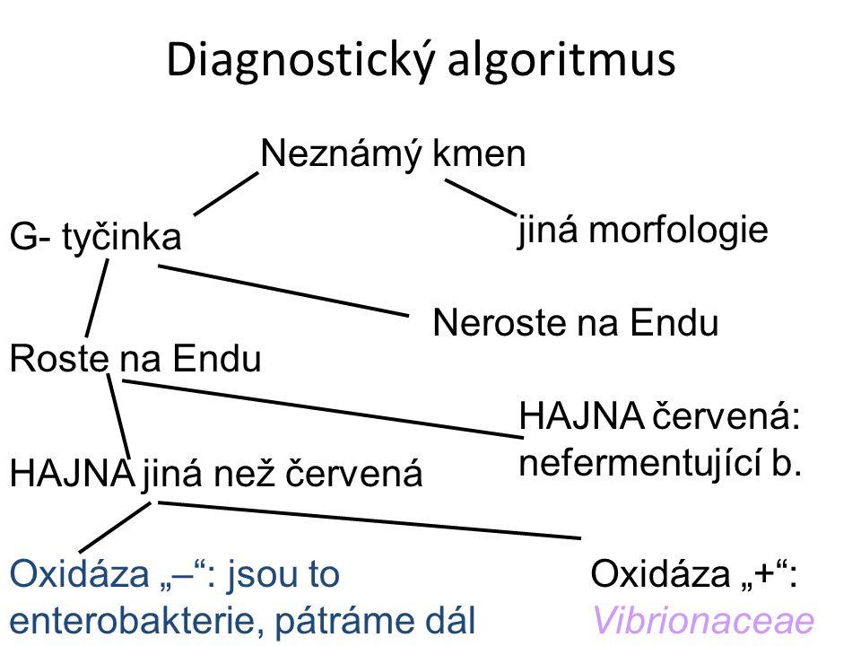 """Diagnostický algoritmus Neznámý kmen Roste na Endu Oxidáza """"– : jsou to enterobakterie, pátráme dál Neroste na Endu jiná morfologie G- tyčinka HAJNA červená: nefermentující b."""
