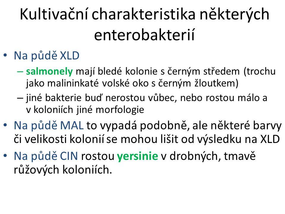 Kultivační charakteristika některých enterobakterií Na půdě XLD – salmonely mají bledé kolonie s černým středem (trochu jako malininkaté volské oko s černým žloutkem) – jiné bakterie buď nerostou vůbec, nebo rostou málo a v koloniích jiné morfologie Na půdě MAL to vypadá podobně, ale některé barvy či velikosti kolonií se mohou lišit od výsledku na XLD Na půdě CIN rostou yersinie v drobných, tmavě růžových koloniích.