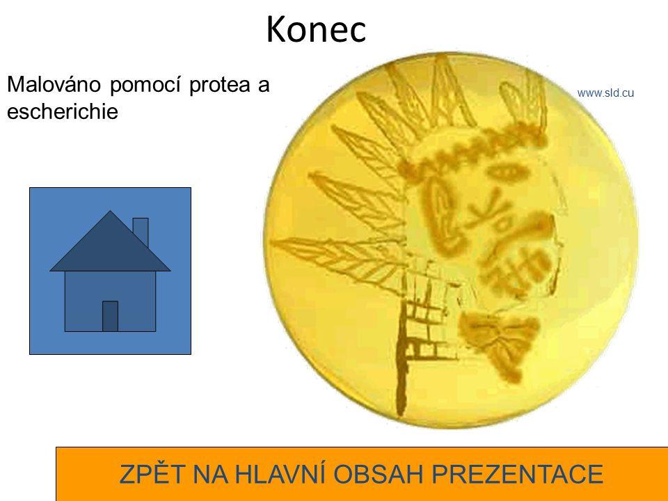 Konec Malováno pomocí protea a escherichie www.sld.cu ZPĚT NA HLAVNÍ OBSAH PREZENTACE