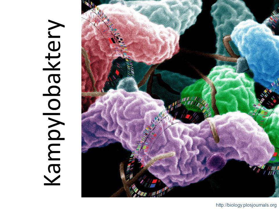 Kampylobaktery http://biology.plosjournals.org