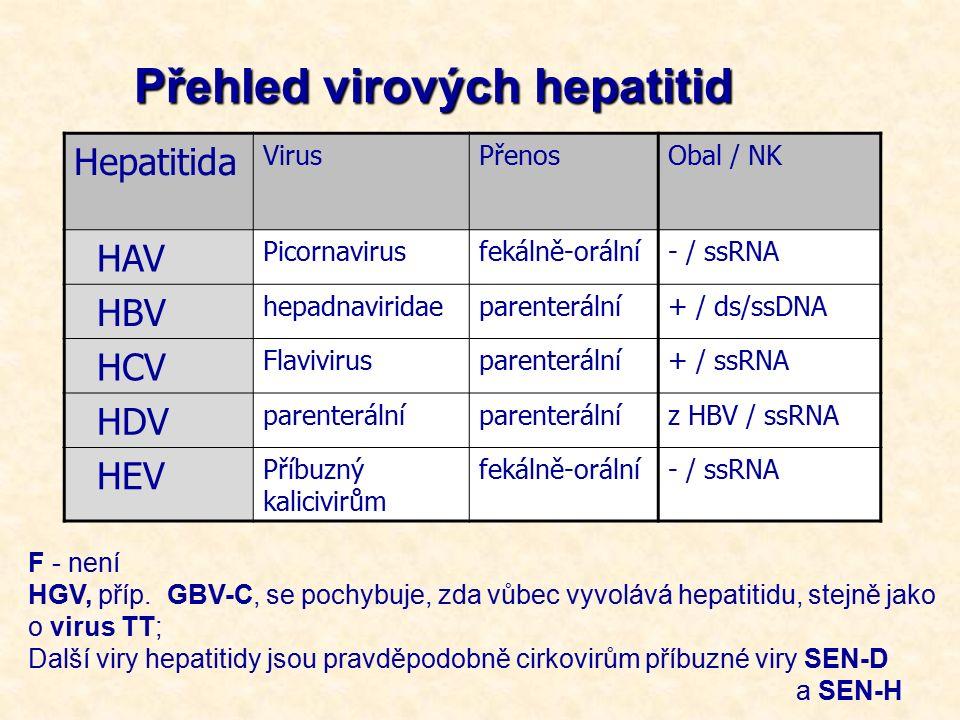 Přehled virových hepatitid Hepatitida VirusPřenosObal / NK HAV Picornavirusfekálně-orální- / ssRNA HBV hepadnaviridaeparenterální+ / ds/ssDNA HCV Flavivirusparenterální+ / ssRNA HDV parenterální z HBV / ssRNA HEV Příbuzný kalicivirům fekálně-orální- / ssRNA F - není HGV, příp.