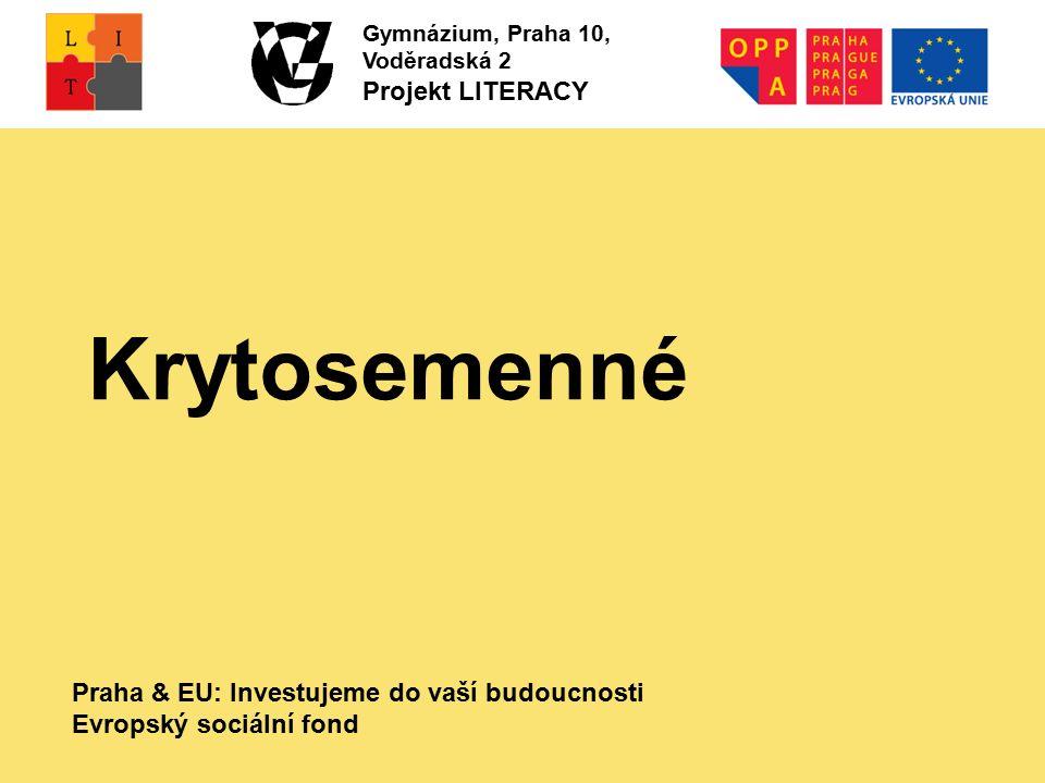 Praha & EU: Investujeme do vaší budoucnosti Evropský sociální fond Gymnázium, Praha 10, Voděradská 2 Projekt LITERACY Krytosemenné