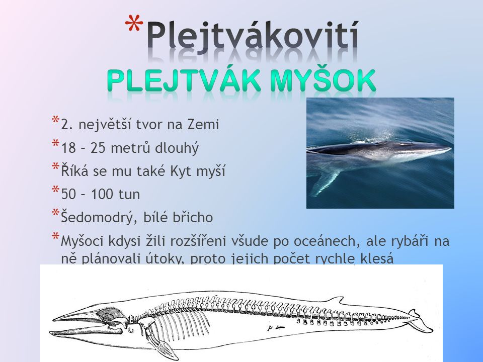 * 2. největší tvor na Zemi * 18 – 25 metrů dlouhý * Říká se mu také Kyt myší * 50 – 100 tun * Šedomodrý, bílé břicho * Myšoci kdysi žili rozšířeni všu