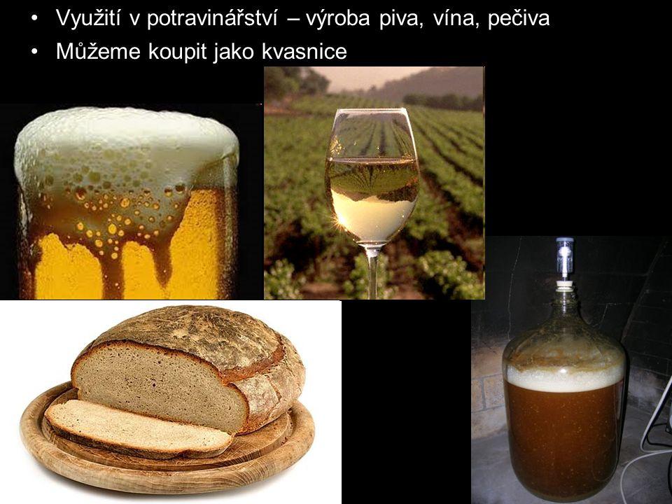 Využití v potravinářství – výroba piva, vína, pečiva Můžeme koupit jako kvasnice