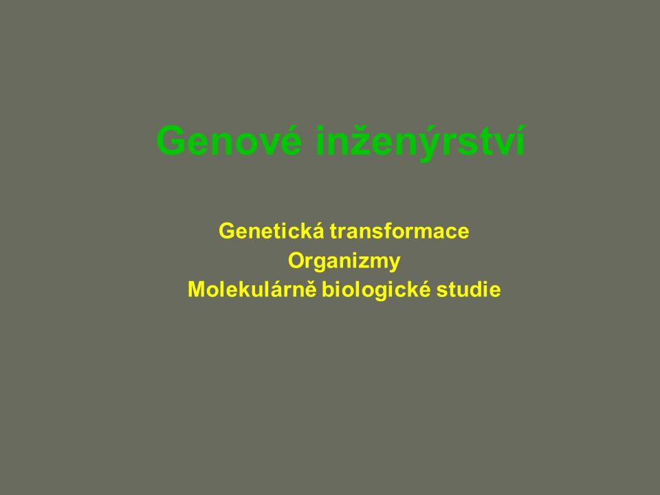 Inaktivace genu Jednodušší je zajistit než blokovat expresi genu Někdy lze inaktivovat gen pomocí exprese jiného genu: aptamery, ribozymy, mutantní proteiny, intrabodies TFO - triplex forming oligonucleotide aptamer - vazebný oligonukleotid ribozymy - s RNázovou aktivitou