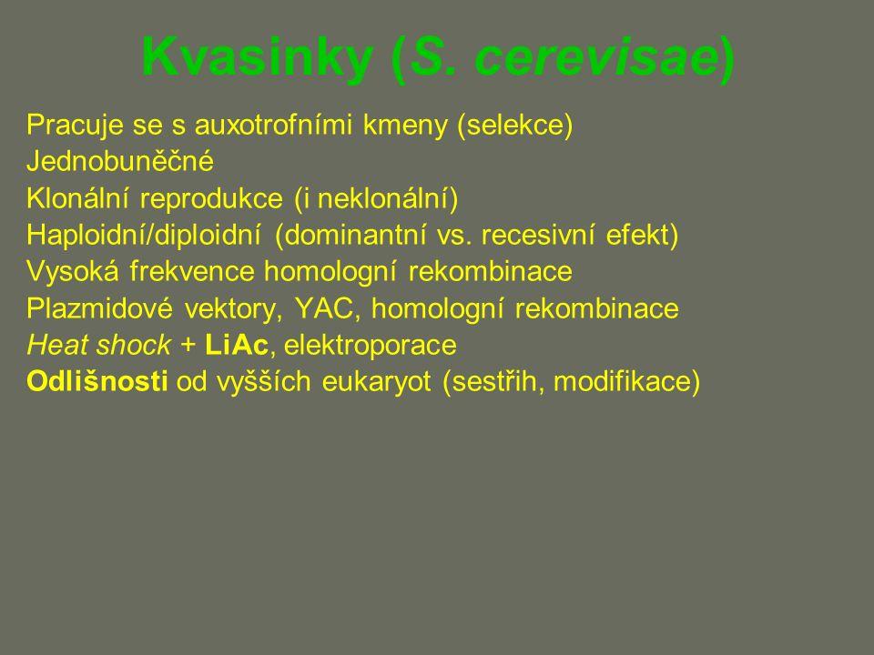 Kvasinky (S.