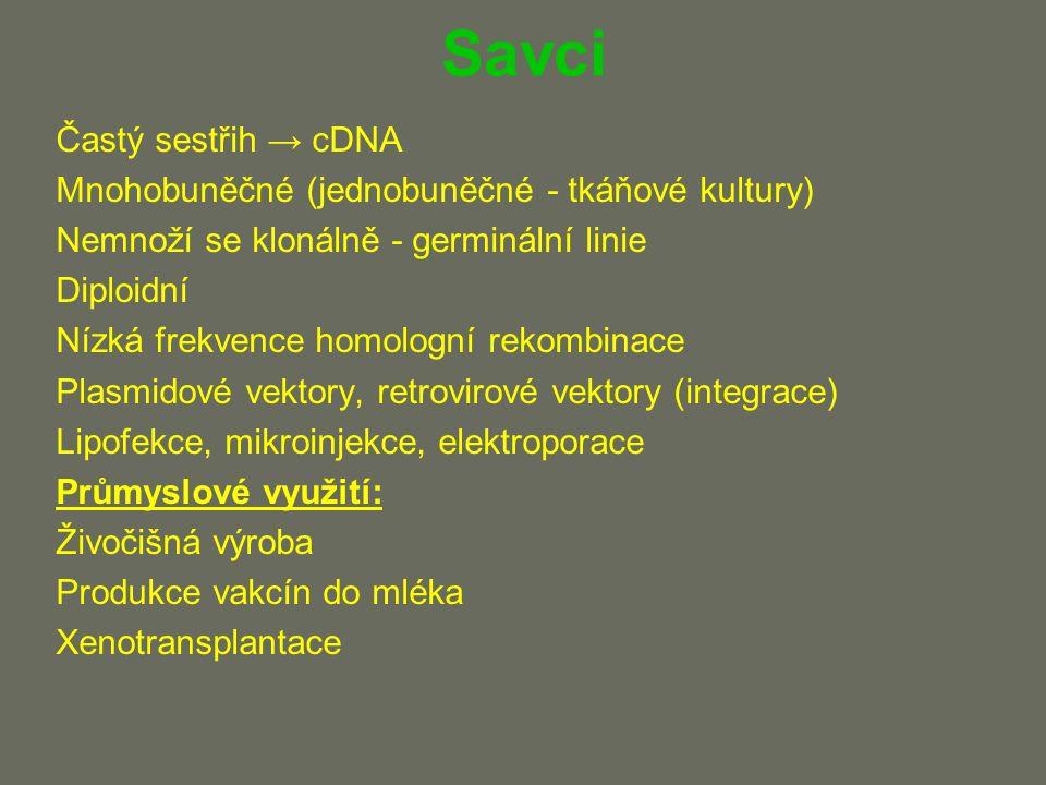 Savci Častý sestřih → cDNA Mnohobuněčné (jednobuněčné - tkáňové kultury) Nemnoží se klonálně - germinální linie Diploidní Nízká frekvence homologní rekombinace Plasmidové vektory, retrovirové vektory (integrace) Lipofekce, mikroinjekce, elektroporace Průmyslové využití: Živočišná výroba Produkce vakcín do mléka Xenotransplantace