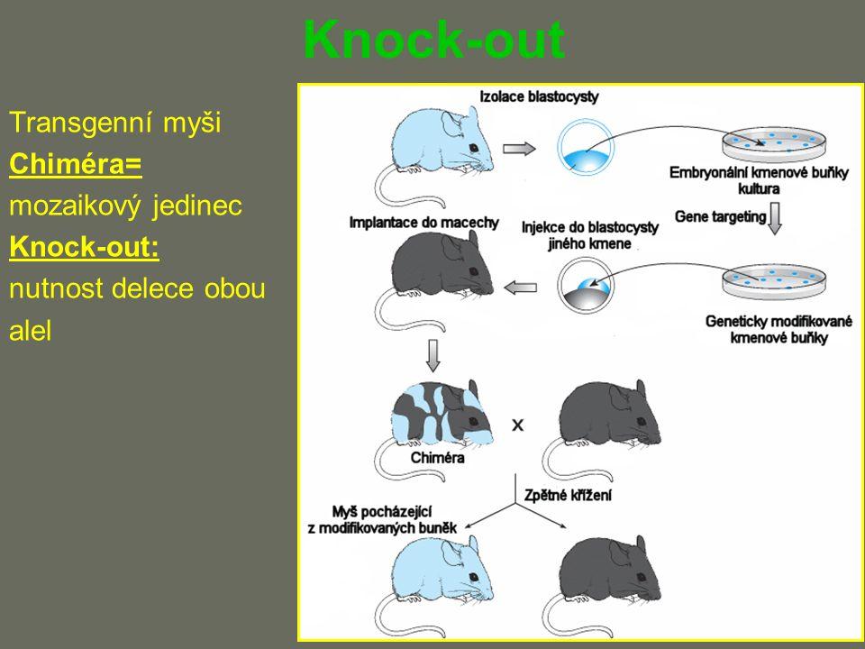 Knock-out Transgenní myši Chiméra= mozaikový jedinec Knock-out: nutnost delece obou alel