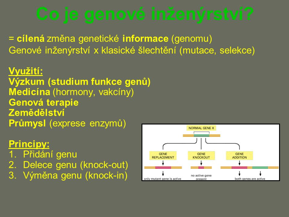 Horizontální genový přenos Transfer genu z jedné buňky do druhé (ne v přímé linii) Přirozeně: Bakterie - transformace, transdukce, konjugace Eukaryota - SAO→jádro, paraziti Genové inženýrství - aspekty: Univerzální genetický kód (gen se překládá do stejného proteinu) Rozdílné regulační sekvence (jiná interpretace) (pojistka)