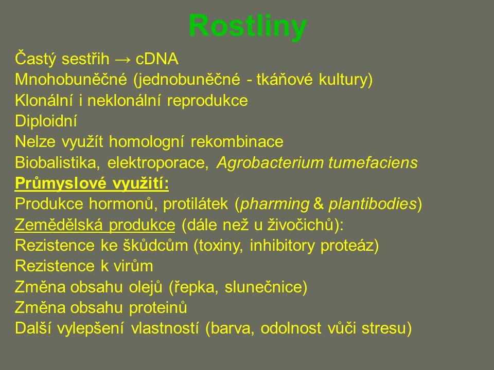Rostliny Častý sestřih → cDNA Mnohobuněčné (jednobuněčné - tkáňové kultury) Klonální i neklonální reprodukce Diploidní Nelze využít homologní rekombinace Biobalistika, elektroporace, Agrobacterium tumefaciens Průmyslové využití: Produkce hormonů, protilátek (pharming & plantibodies) Zemědělská produkce (dále než u živočichů): Rezistence ke škůdcům (toxiny, inhibitory proteáz) Rezistence k virům Změna obsahu olejů (řepka, slunečnice) Změna obsahu proteinů Další vylepšení vlastností (barva, odolnost vůči stresu)