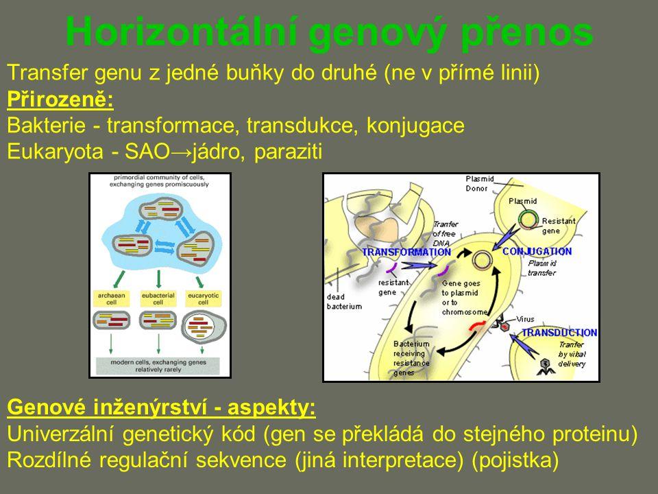 Shrnutí Genové inženýrství = cílený zásah do genetické informace organizmu Vektor = plazmid, virus nebo integrativní fragment DNA Selekce pozitivních klonů Použití = zemědělství, medicína, průmysl, základní výzkum Specifické zacházení s jednotlivými organizmy Jednobuněčné x mnohobuněčné; haploidní x diploidní Genomová knihovna je kolekce klonů nesoucích části DNA cDNA knihovna je kolekce klonů nesoucích cDNA Sekvenační projekty kombinují in vitro techniky a knihovny Genová terapie: dědičná onemocnění, nádory i infekce Exprese genu (dominantní efekt) x inaktivace genu