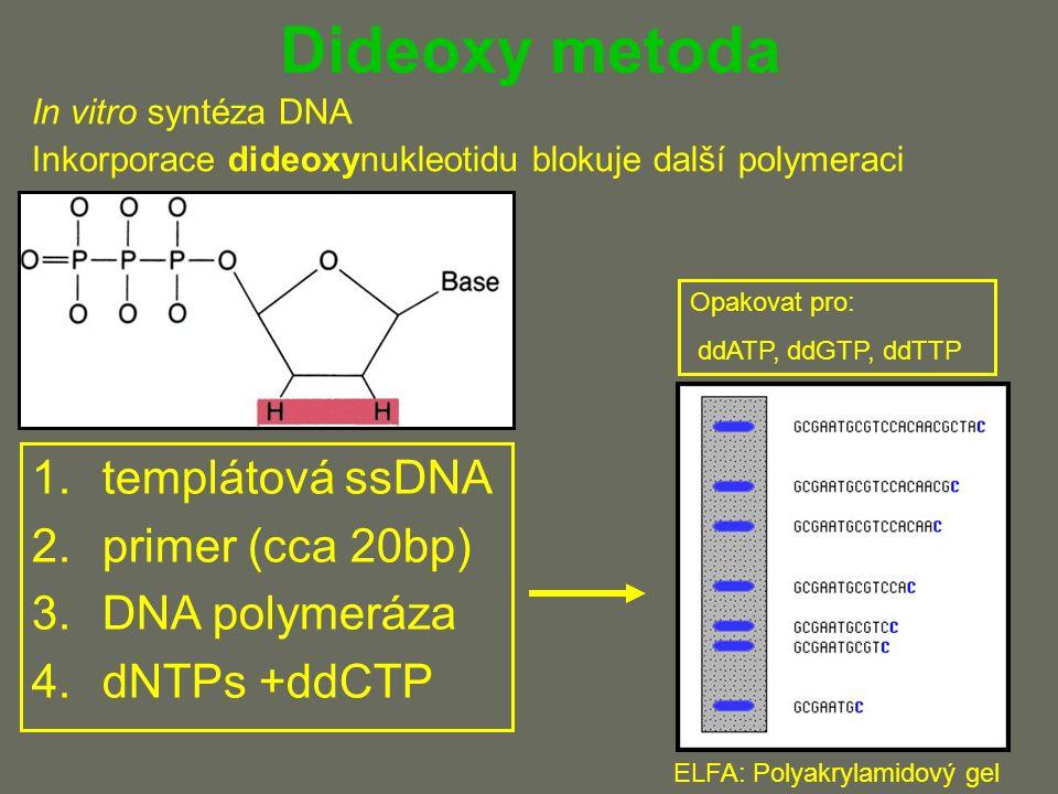 Dideoxy metoda In vitro syntéza DNA Inkorporace dideoxynukleotidu blokuje další polymeraci 1.templátová ssDNA 2.primer (cca 20bp) 3.DNA polymeráza 4.dNTPs +ddCTP ELFA: Polyakrylamidový gel Opakovat pro: ddATP, ddGTP, ddTTP