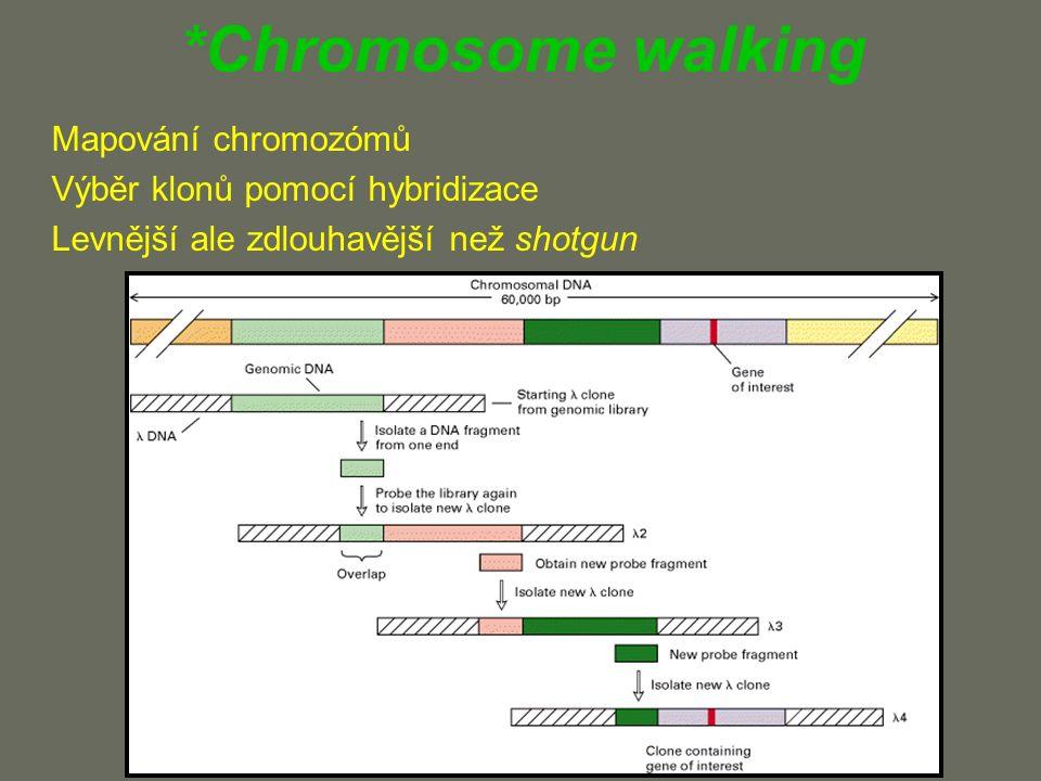 *Chromosome walking Mapování chromozómů Výběr klonů pomocí hybridizace Levnější ale zdlouhavější než shotgun