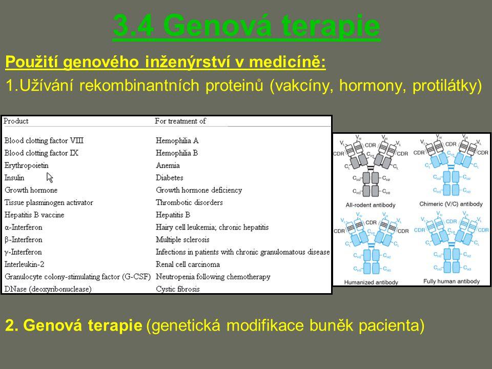 3.4 Genová terapie Použití genového inženýrství v medicíně: 1.Užívání rekombinantních proteinů (vakcíny, hormony, protilátky) 2.