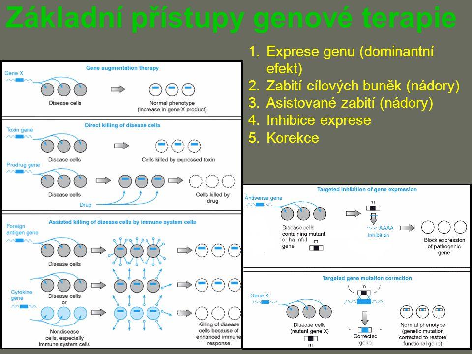 Základní přístupy genové terapie 1.Exprese genu (dominantní efekt) 2.Zabití cílových buněk (nádory) 3.Asistované zabití (nádory) 4.Inhibice exprese 5.Korekce