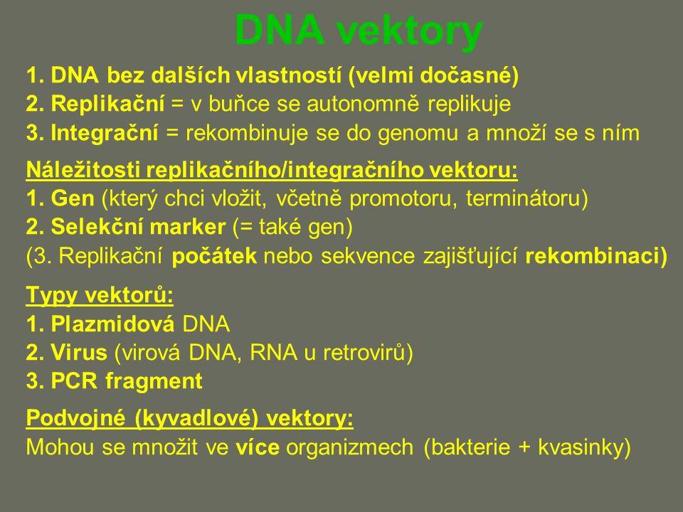 DNA vektory 1. DNA bez dalších vlastností (velmi dočasné) 2.