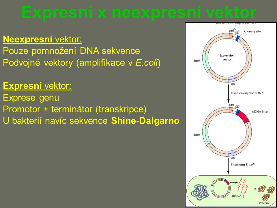 Expresní x neexpresní vektor Neexpresní vektor: Pouze pomnožení DNA sekvence Podvojné vektory (amplifikace v E.coli) Expresní vektor: Exprese genu Promotor + terminátor (transkripce) U bakterií navíc sekvence Shine-Dalgarno