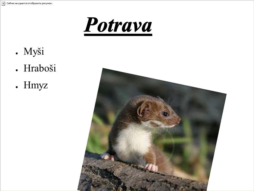Potrava ● Myši ● Hraboši ● Hmyz