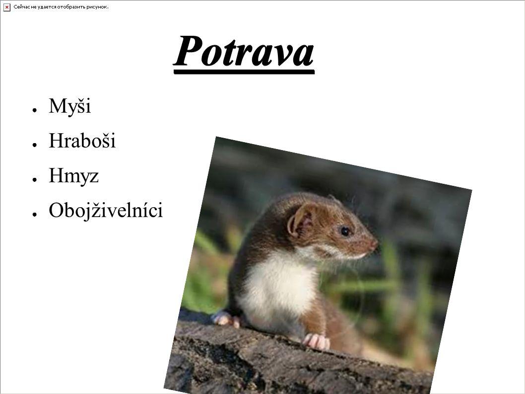 Potrava ● Myši ● Hraboši ● Hmyz ● Obojživelníci