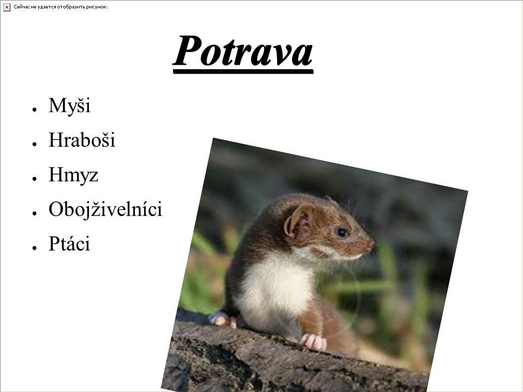 Potrava ● Myši ● Hraboši ● Hmyz ● Obojživelníci ● Ptáci