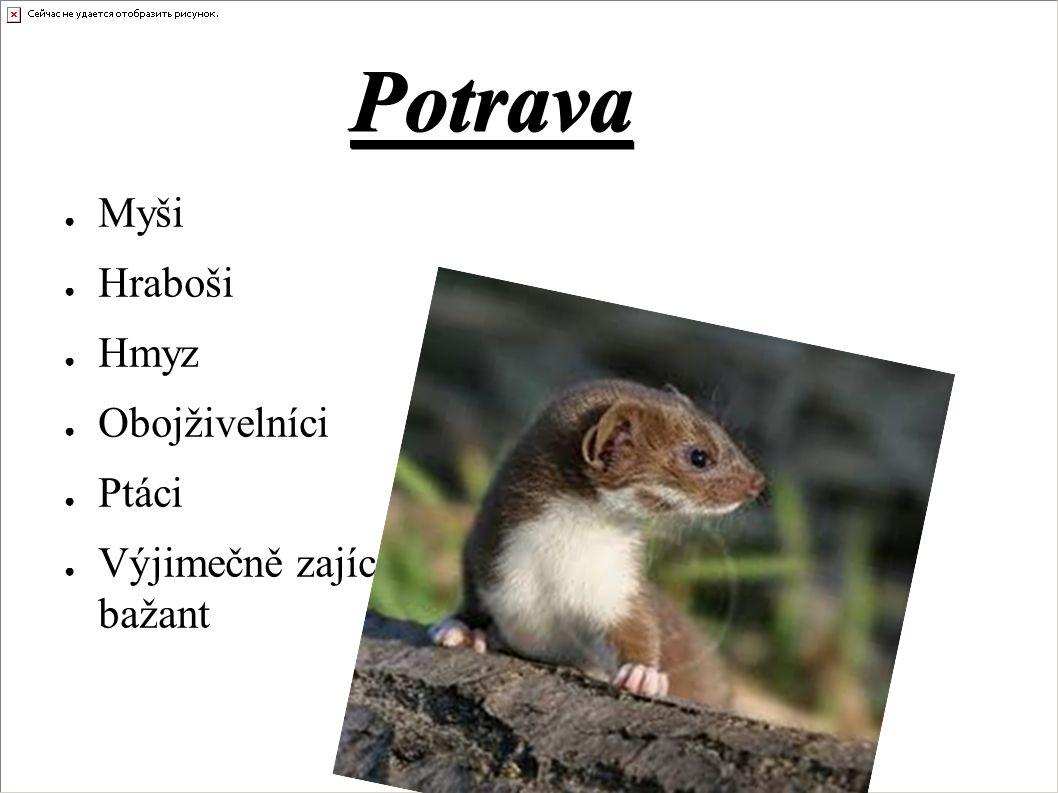Potrava ● Myši ● Hraboši ● Hmyz ● Obojživelníci ● Ptáci ● Výjimečně zajíc, bažant