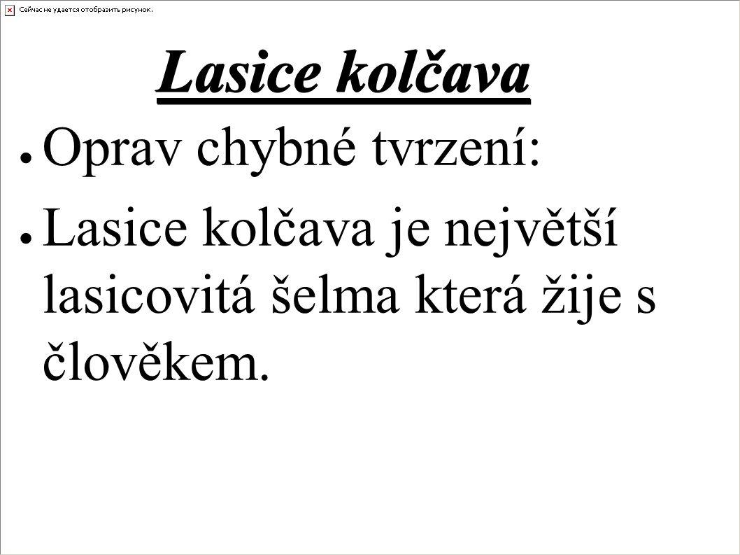 Lasice kolčava ● Oprav chybné tvrzení: ● Lasice kolčava je největší lasicovitá šelma která žije s člověkem.