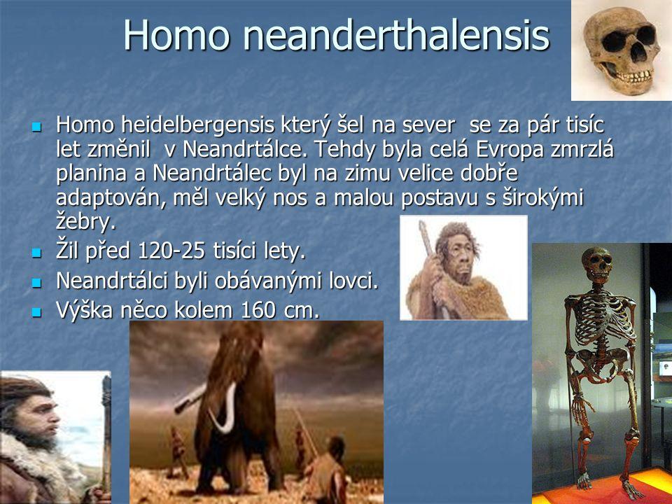 Homo neanderthalensis Homo heidelbergensis který šel na sever se za pár tisíc let změnil v Neandrtálce. Tehdy byla celá Evropa zmrzlá planina a Neandr