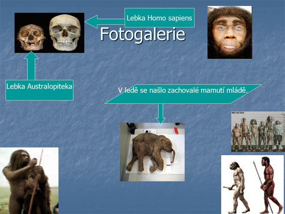 Fotogalerie Lebka Australopiteka V ledě se našlo zachovalé mamutí mládě. Lebka Homo sapiens