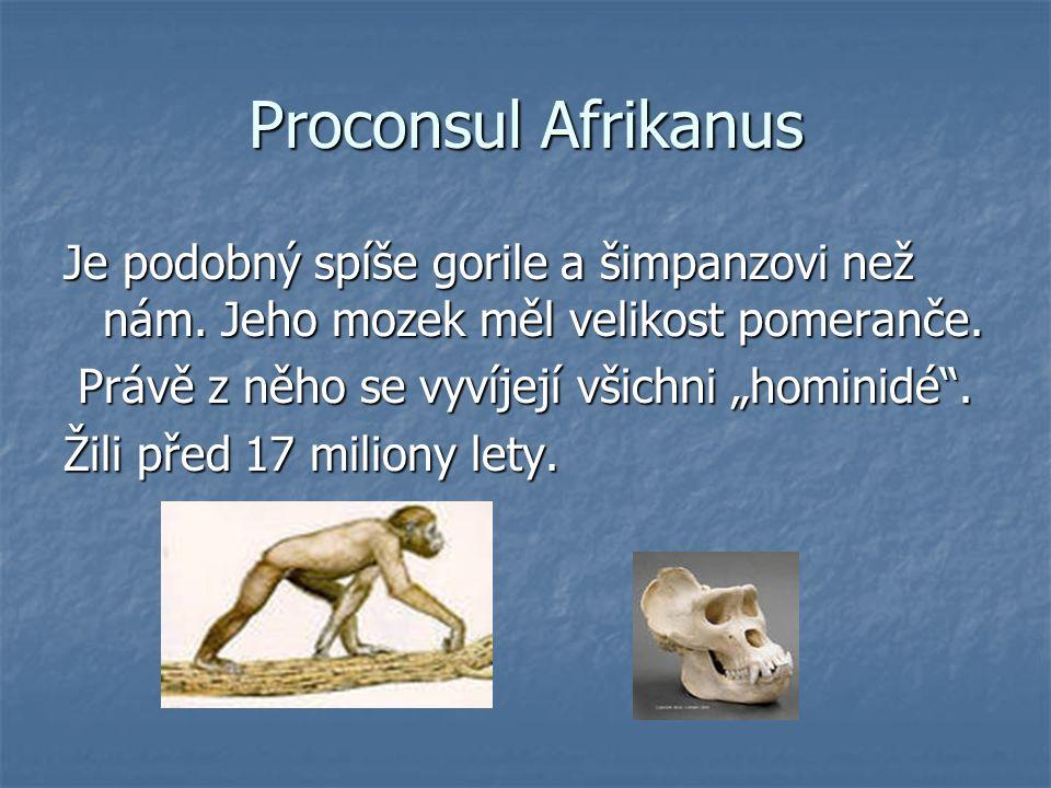 Proconsul Afrikanus Je podobný spíše gorile a šimpanzovi než nám.