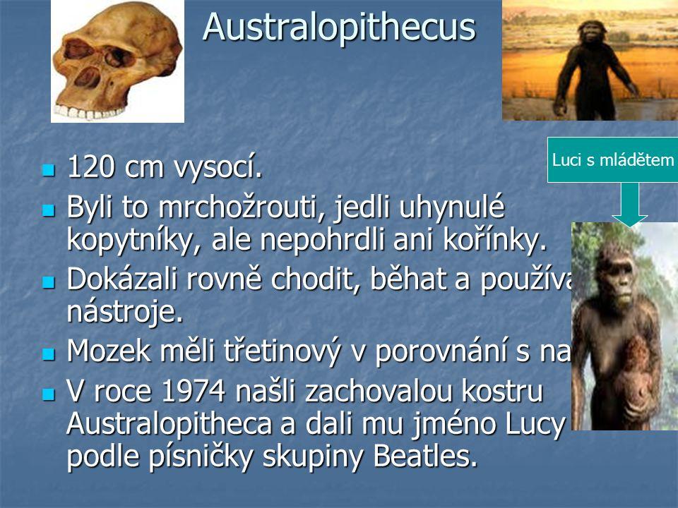 Australopithecus 120 cm vysocí. 120 cm vysocí.