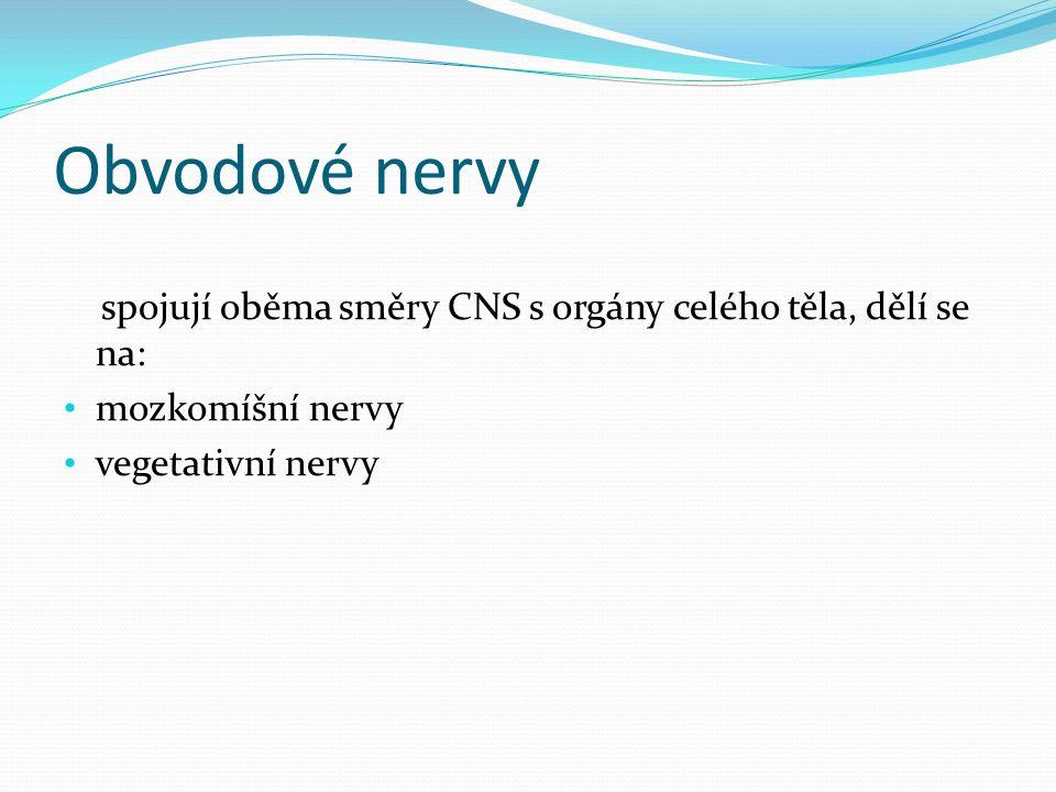 Mozkomíšní nervy vlákna dostředivá, senzitivní (z kůže nebo smyslových orgánů) nebo vedou do příčně pruhovaných svalů (vlákna motorická) 12 mozkových nervů – vycházejí z mozku, mohou být senzitivní, motorické nebo smíšené 31 míšních nervů – odstupují z míchy, inervují většinu kosterního svalstva